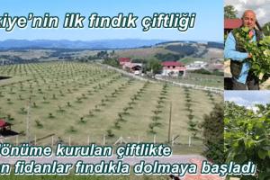Türkiye'nin İlk Fındık Çiftliği Üretime Geçiyor