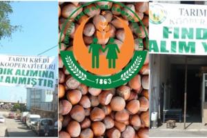 Tarım Kredi Kooperatifleri de Fındık Alıyor