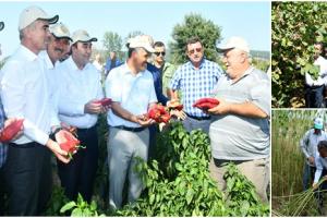 2019 Yılında Samsun Çiftçisine 303 Milyon TL Destekleme Ödemesi Yapıldı