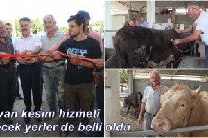 Atakum Canlı Hayvan Pazarı Üreticiyle Birlikte Açıldı