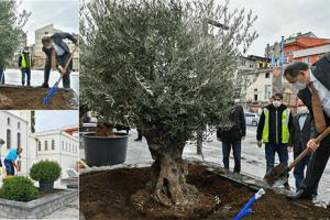 Saathane Meydanı Zeytin Ağaçları İle Yeşilleniyor