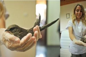 Yaralı Ebabil KuşuTedavi Ediliyor