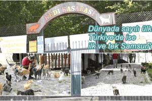 Kedi Kasabası Örnek Oluyor