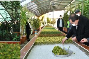 Büyükşehir Kendi Süs Bitkisini Üretiyor