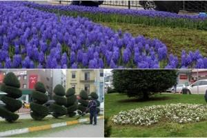 Park ve Bahçelerde Çiçekler Açtı