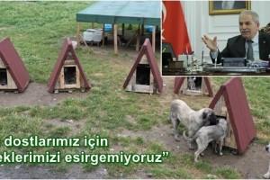 Sokak Hayvanları İçin Kulübe Çalışmasına Başkan Demirtaş'dan Destek