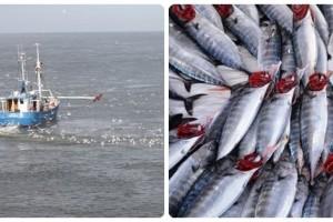 Balıkçılık Sezonu 1 Eylül'de Başlıyor