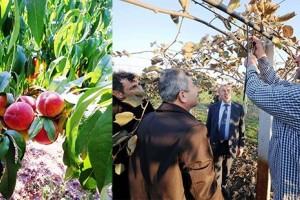 Büyükşehir Destekliyor, Kivi ve Şeftali Üretimi Artıyor