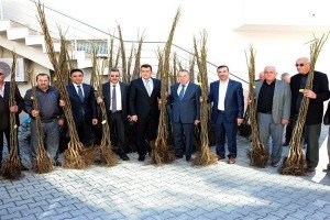 Büyükşehir'den Çiftçilere 12 bin Ceviz Fidesi