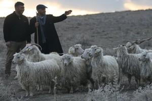 Türkiye'de Bir İlk; Çoban Fuarı