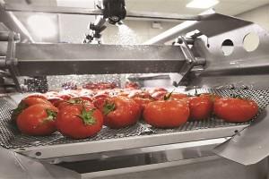 Yaş Sebze ve Meyvede 25 Milyar Lira Çöpe Gidiyor