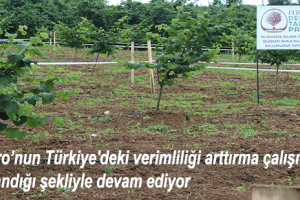 Türk Fındığı Üzerine Yapılan Çalışmalar Bizim İçin Çok Önemli