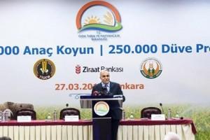 500 Bin Anaç Koyun ve 250 Bin Düve Projeleri Protokolü İmzalandı