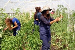 Genç Çiftçilere 2017 Yılında 483 Milyon TL Hibe Verilecek