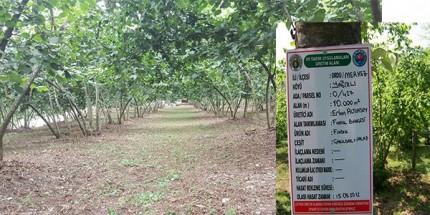 İyi Tarım ve Organik Tarım Desteklemeleri Ödenmeye Başlandı