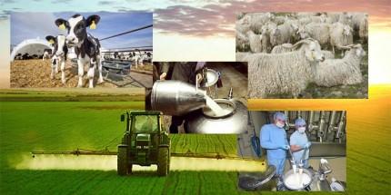 Tarımsal Destekleme Ödemeleri Başlıyor