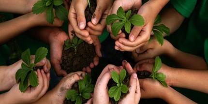 İyi Tarım Uygulamaları Desteğinde Son Gün 17 Mart