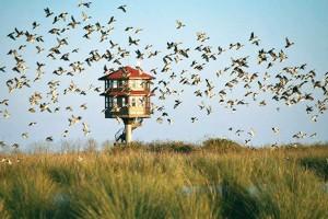 Kuş Cenneti'nden Cennet Gibi Kış Manzaraları