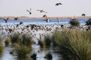 Kuş Cenneti Rehabilitasyon Kliniği Hayvan Ölümlerini Azalttı