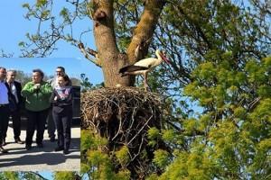 Kuş Cenneti'nde Leyleklerin Hayatı Güvenceye Alınıyor