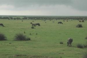 Kızılırmak Deltası Trafiğe Kapatıldı