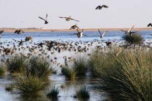 Kızılırmak Deltası Bir İlke İmza Atıyor